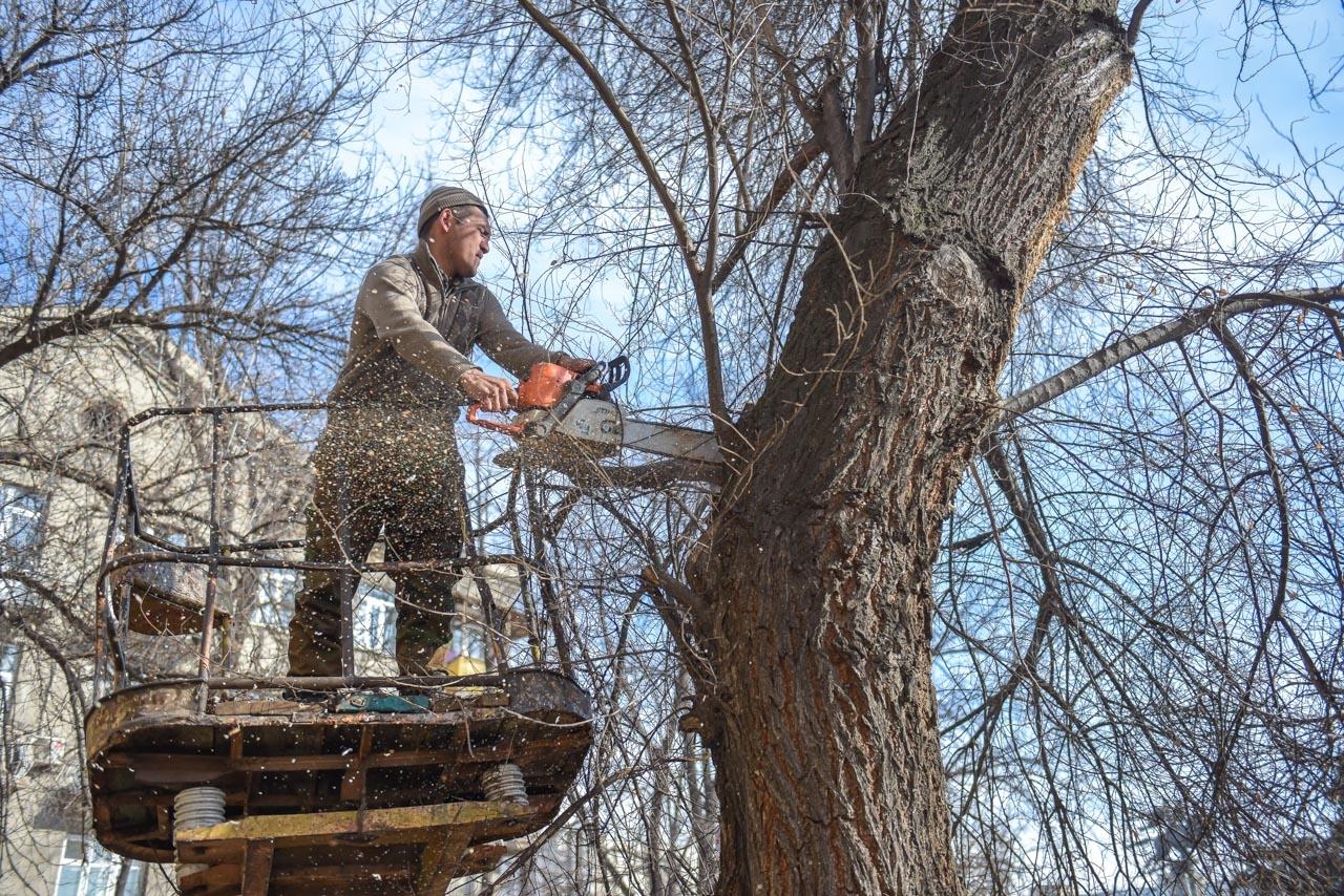 В Тверской области суд заставил местную власть спилить тополя