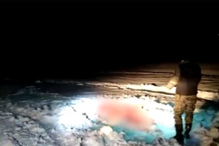 Тверские следователи опубликовали видео с места жестокого убийства лосихи