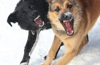 Огромные собаки напали на женщину под Тверью
