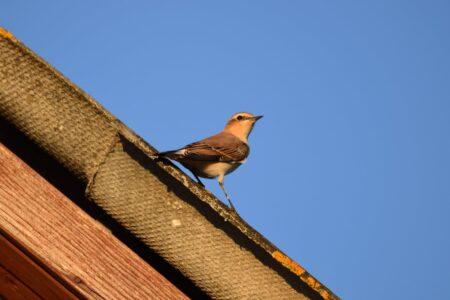Необычная птичка не сразу согласилась на фотосессию  в Тверской области