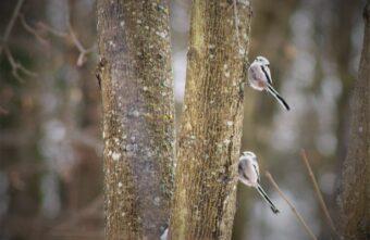В тверском парке на деревьях резвятся пернатые «поварёшки»