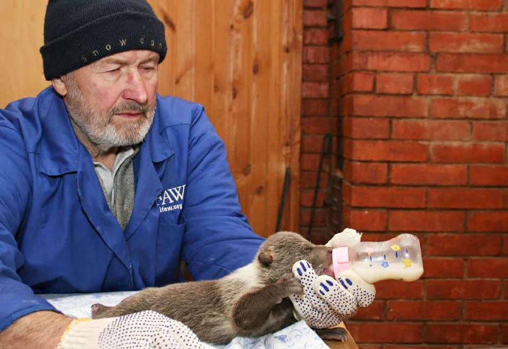 Знаменитый спасатель медвежат-сирот из Тверской области выпустил новую книгу