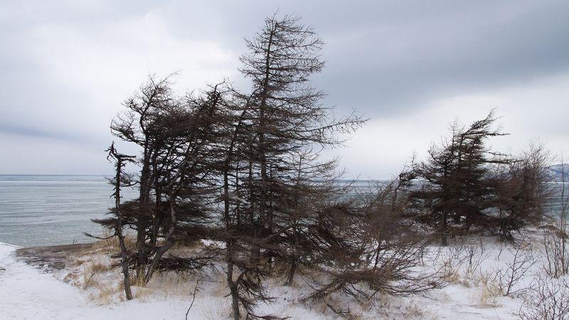 МЧС предупреждает: крепкий ветер подует в Тверской области