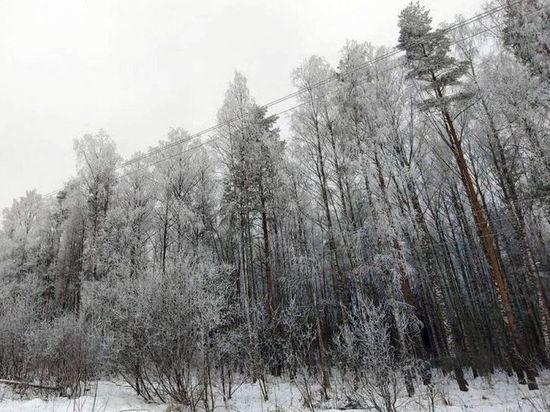 В Тверской области проводятся рейды по проверке лесных участков