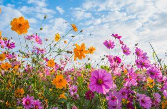 Синоптики дали прогноз на весну и лето 2021 в Тверской области