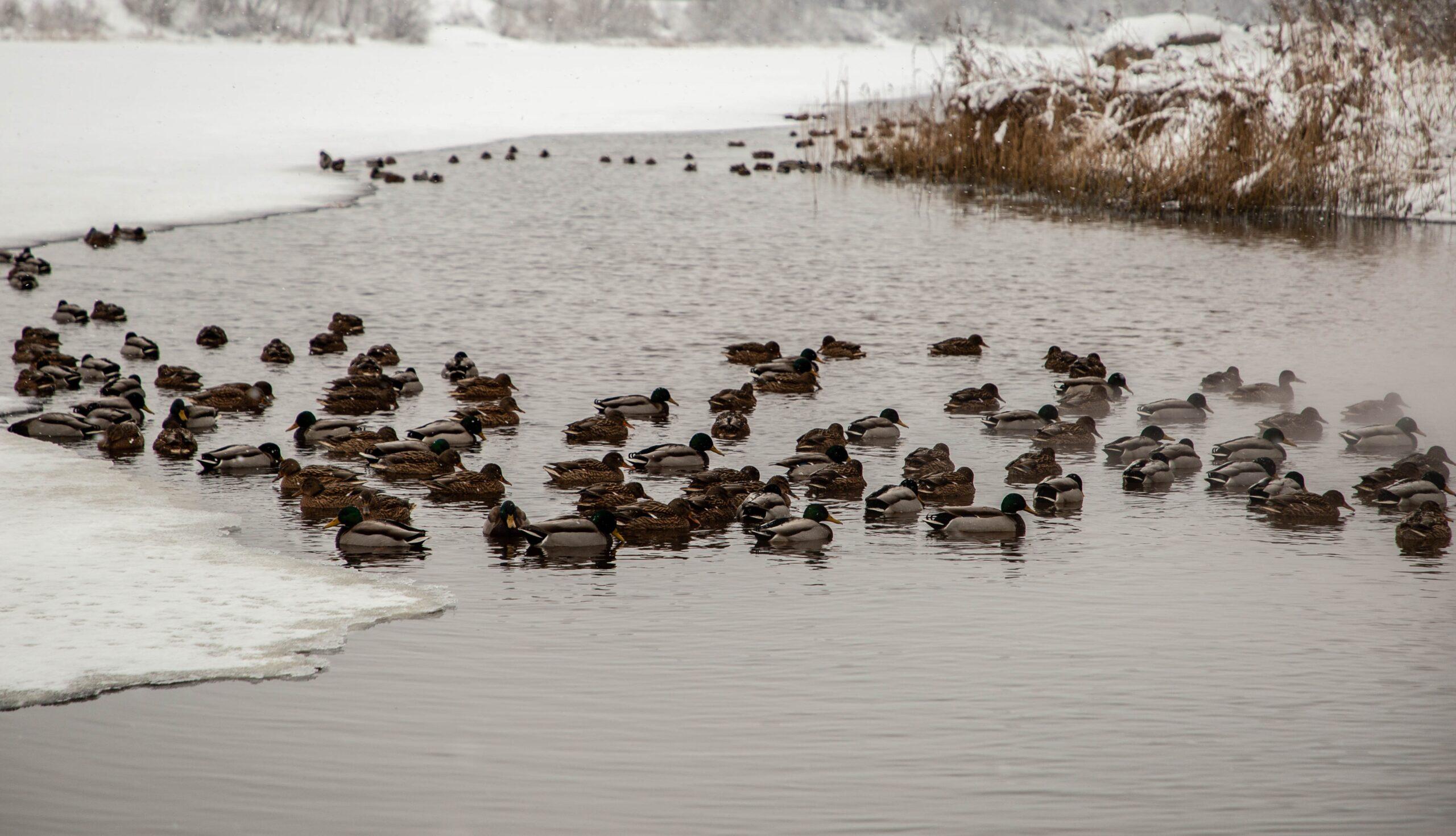 Синоптики рассказали, сколько продержатся в Тверской области аномальные морозы
