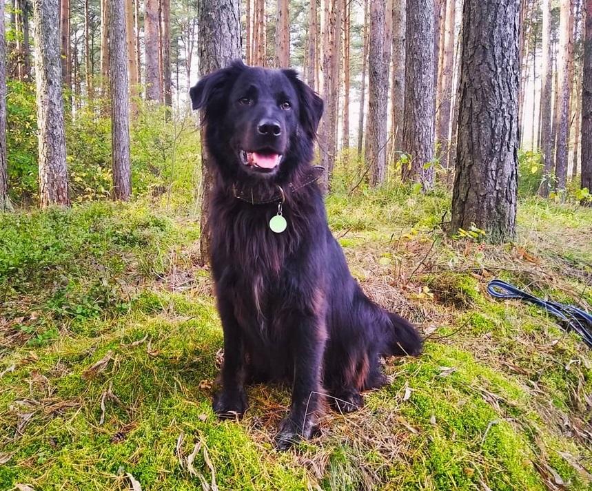 Любимый пёс жительницы Твери умер из-за отравы, раскиданной догхантерами