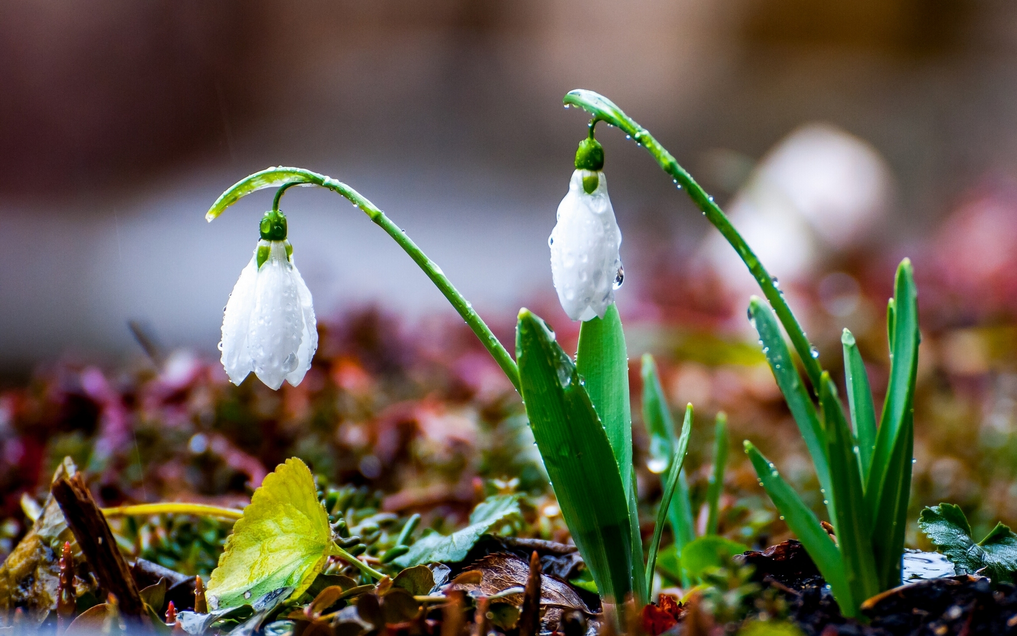 Весенние дожди придут в Тверскую область на следующей неделе