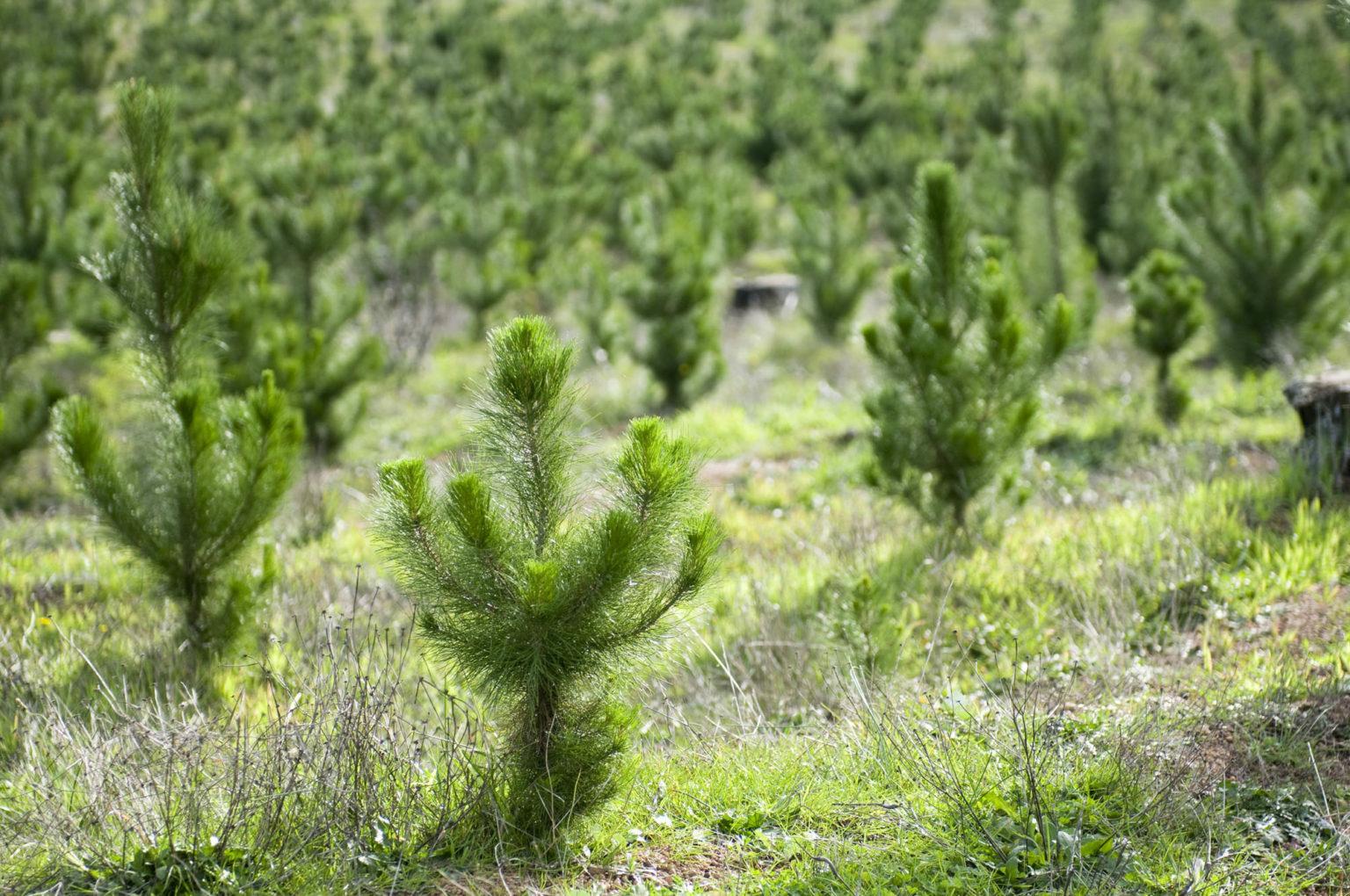 Десятки гектаров заросших полей стали лесом в Тверской области
