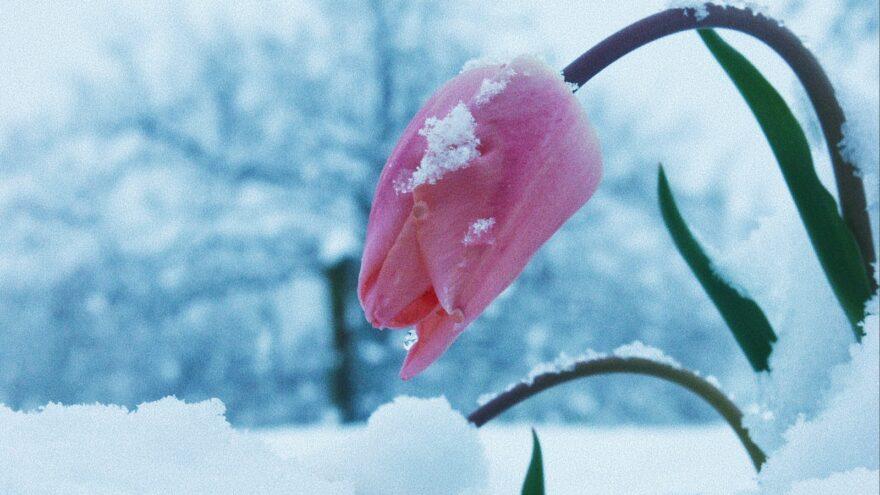 Морозы и снегопад в марте: прогноз на неделю в Тверской области