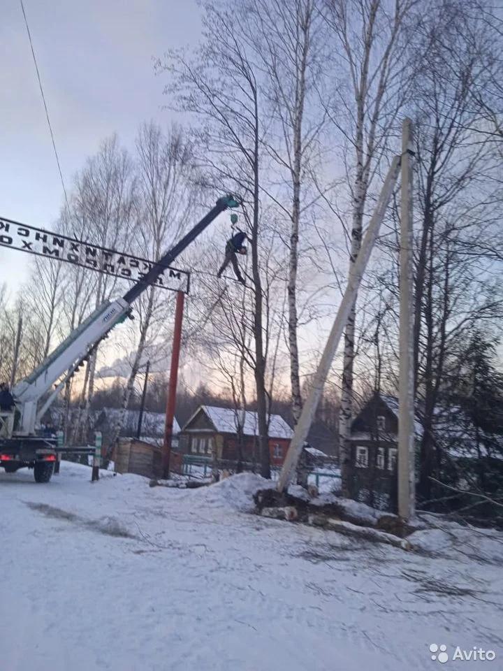 В Тверской области были замечены летающие сучкопилы и сучкорезы