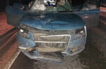 17-летняя девушка пострадала при столкновении машины и лося в Тверской области