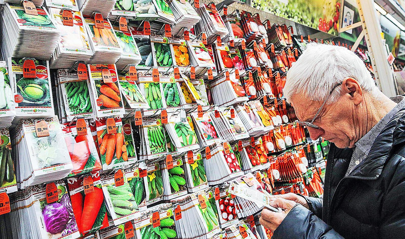 Дачный сезон на носу: как выбрать правильные семена для рассады