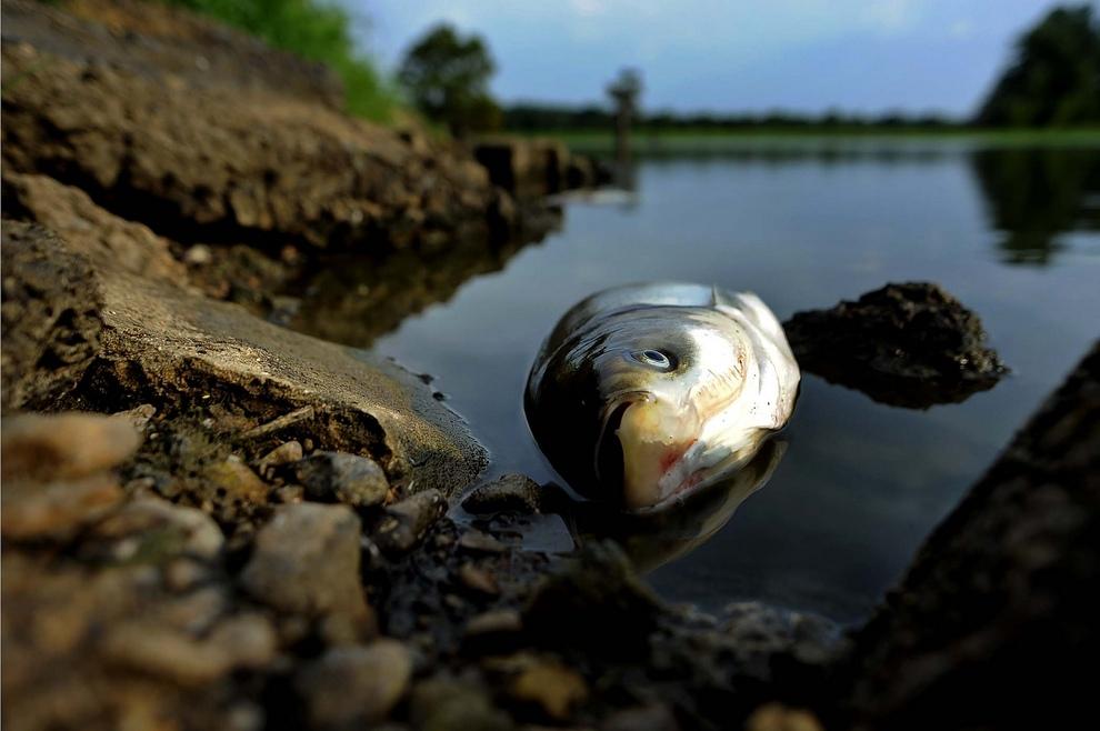 В Твери устанавливают причины гибели рыбы в реке Лазурь