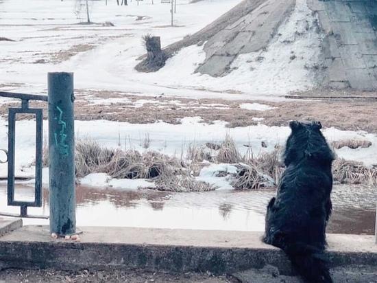 В Твери ищут хозяина для пса, который голодает и ждёт свою погибшую подругу