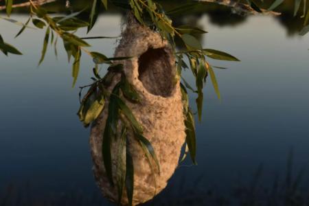 """Странное """"шерстяное"""" гнездо обнаружили жители на окраине Твери"""