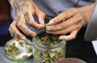 Житель Тверской области поделился марихуаной с «Анатолием» и получил 7 лет
