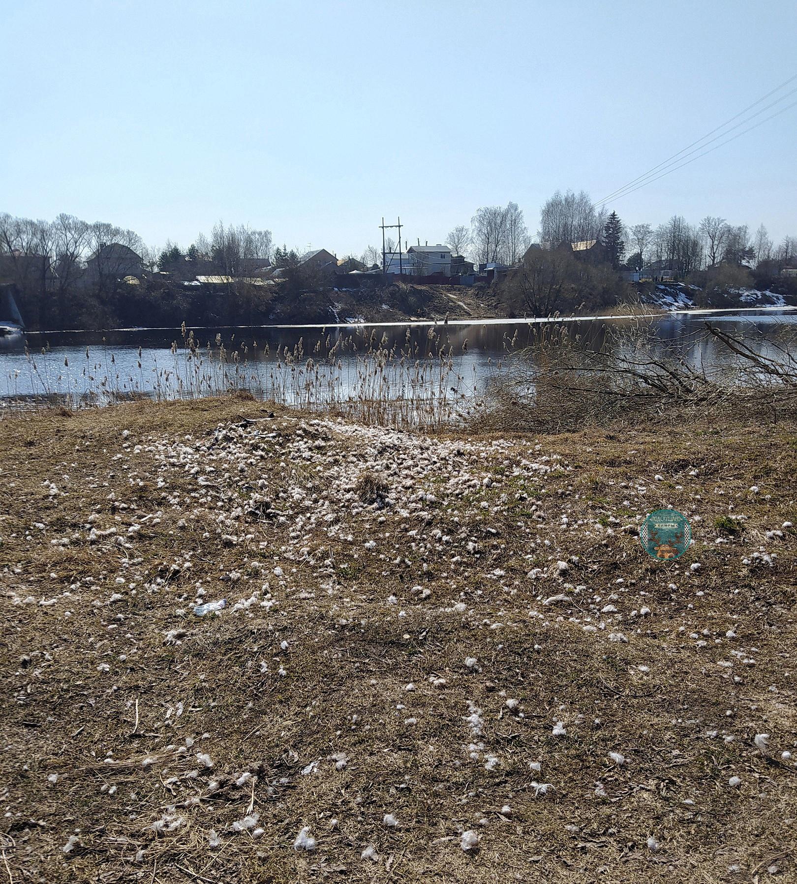 В Тверской области кто-то жестоко убил на реке всех уток