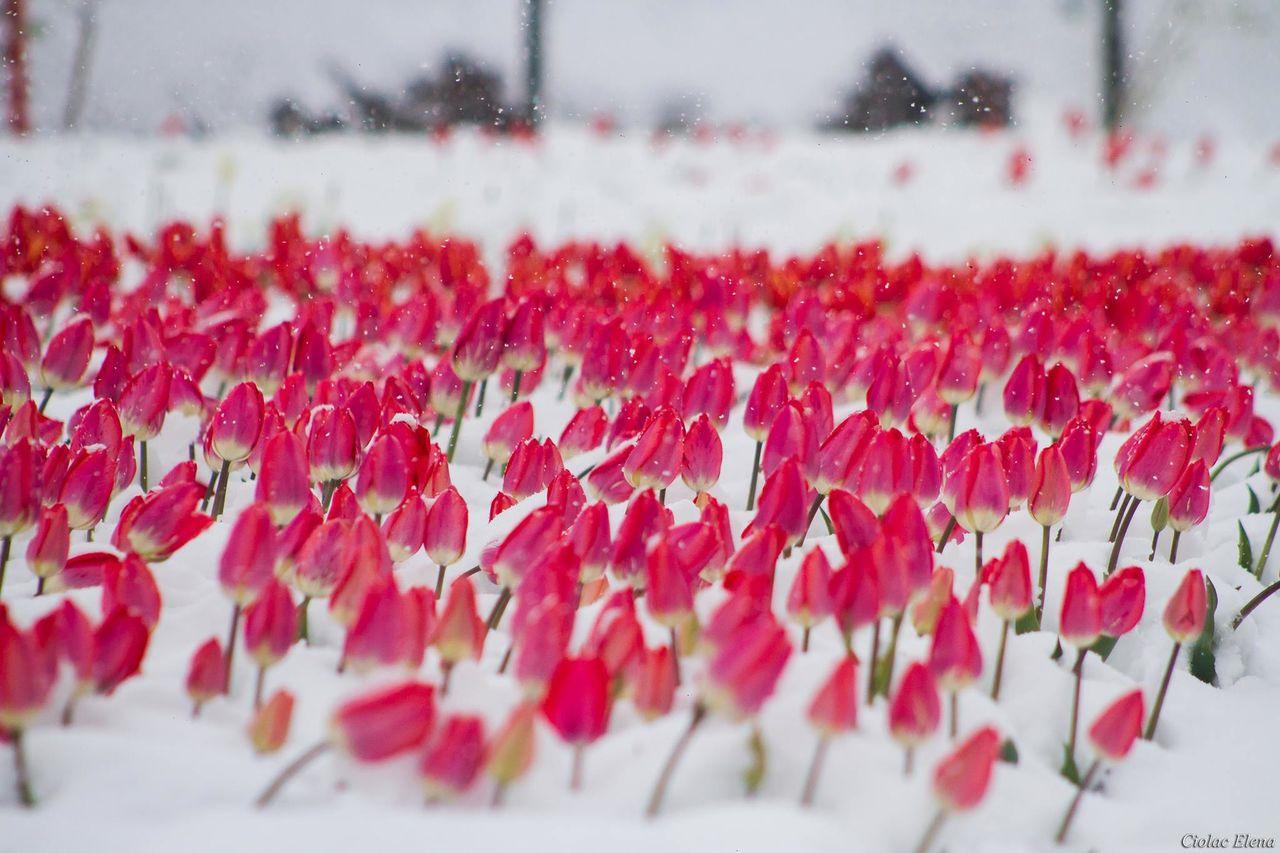 В Тверскую область возвращается зима