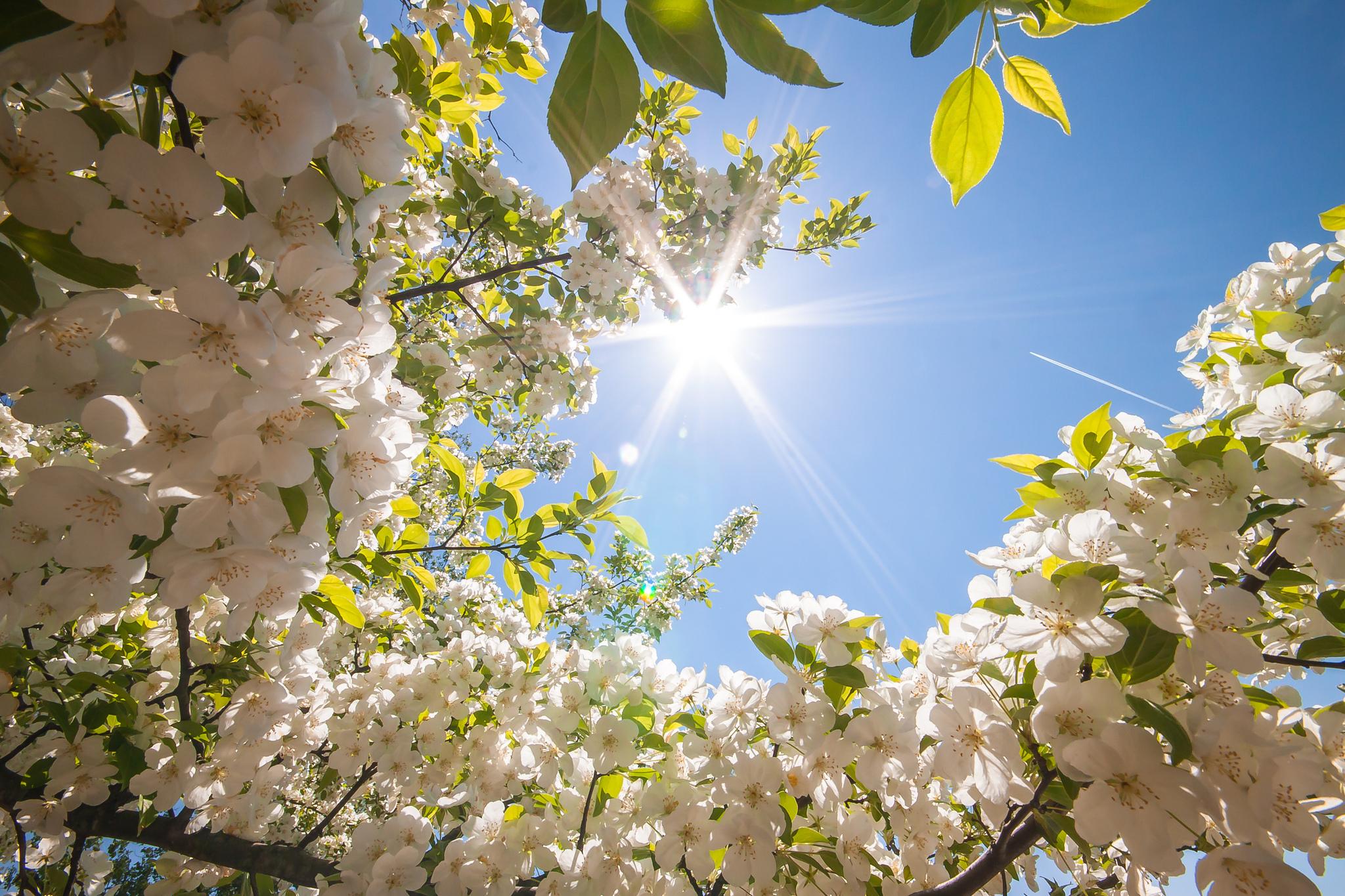 Жителей Тверской области предупредили об опасном солнце в мае
