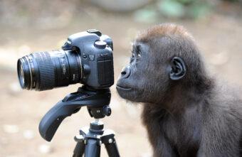 Биологи тверского центра диких животных рассказали о трагедиях на киносъёмках