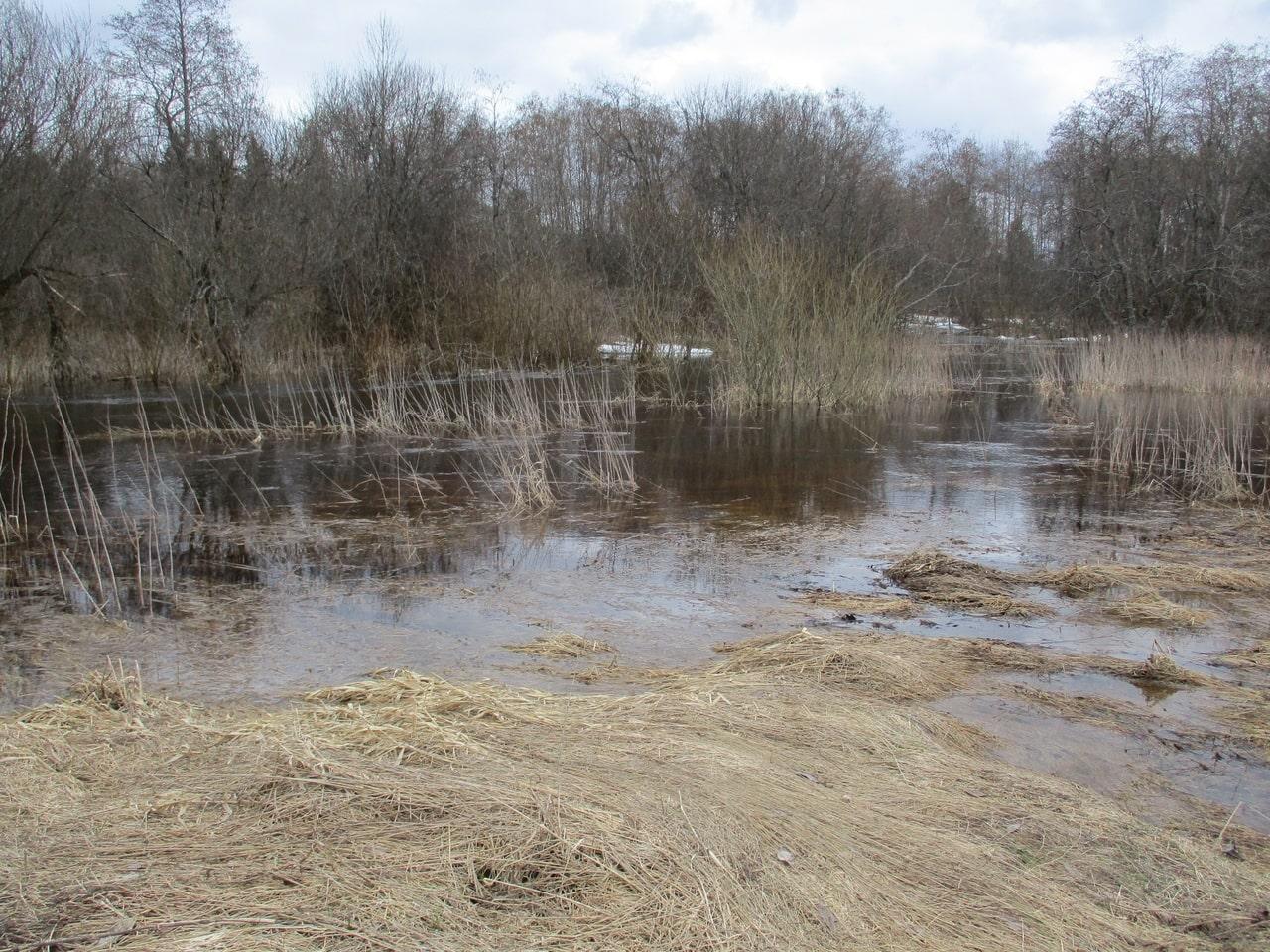 В запаханном поле Тверской области нашли останки красноармейца