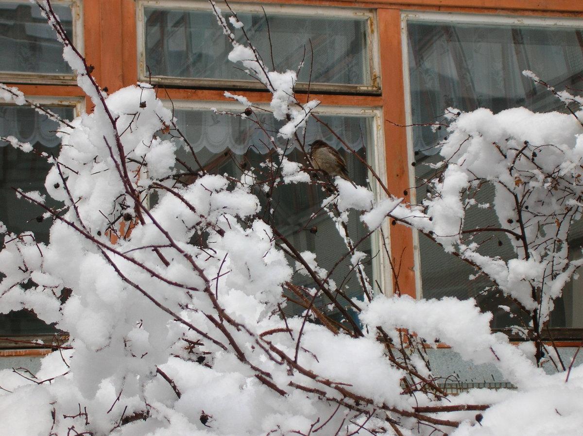 На этой неделе в Тверской области будут ливни и заморозки