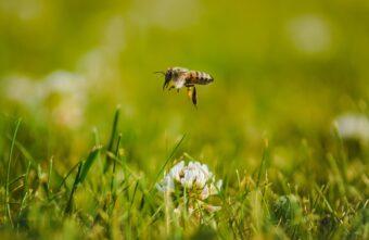 Россельхозцентр рассказал об обеспечении безопасности пасек при применении пестицидов