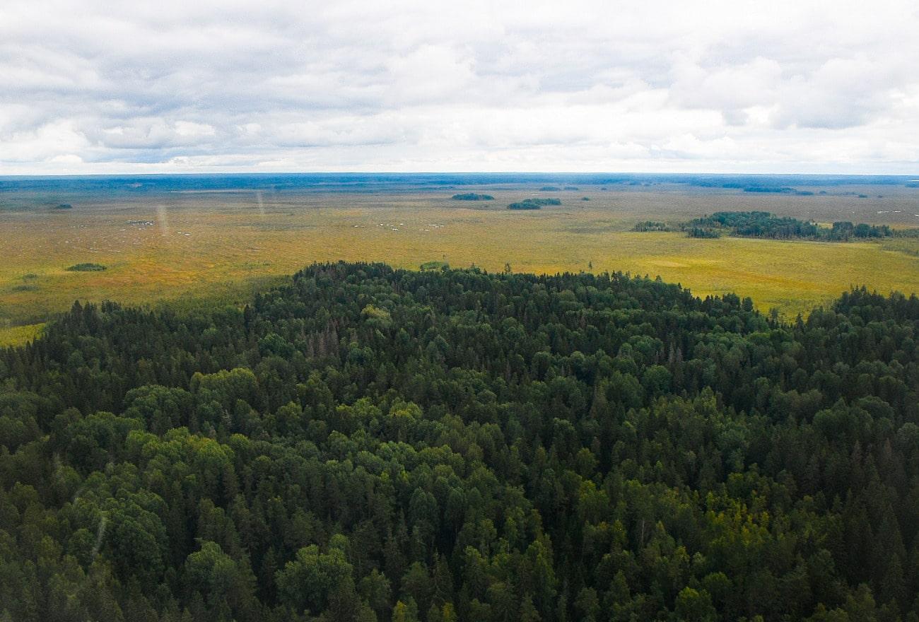 Больше чем на 2500 гектаров увеличится лесной фонд Тверской области