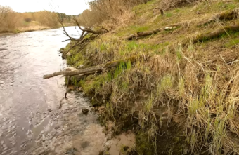 Опубликовано видео массовой гибели икры на берегу в Тверской области