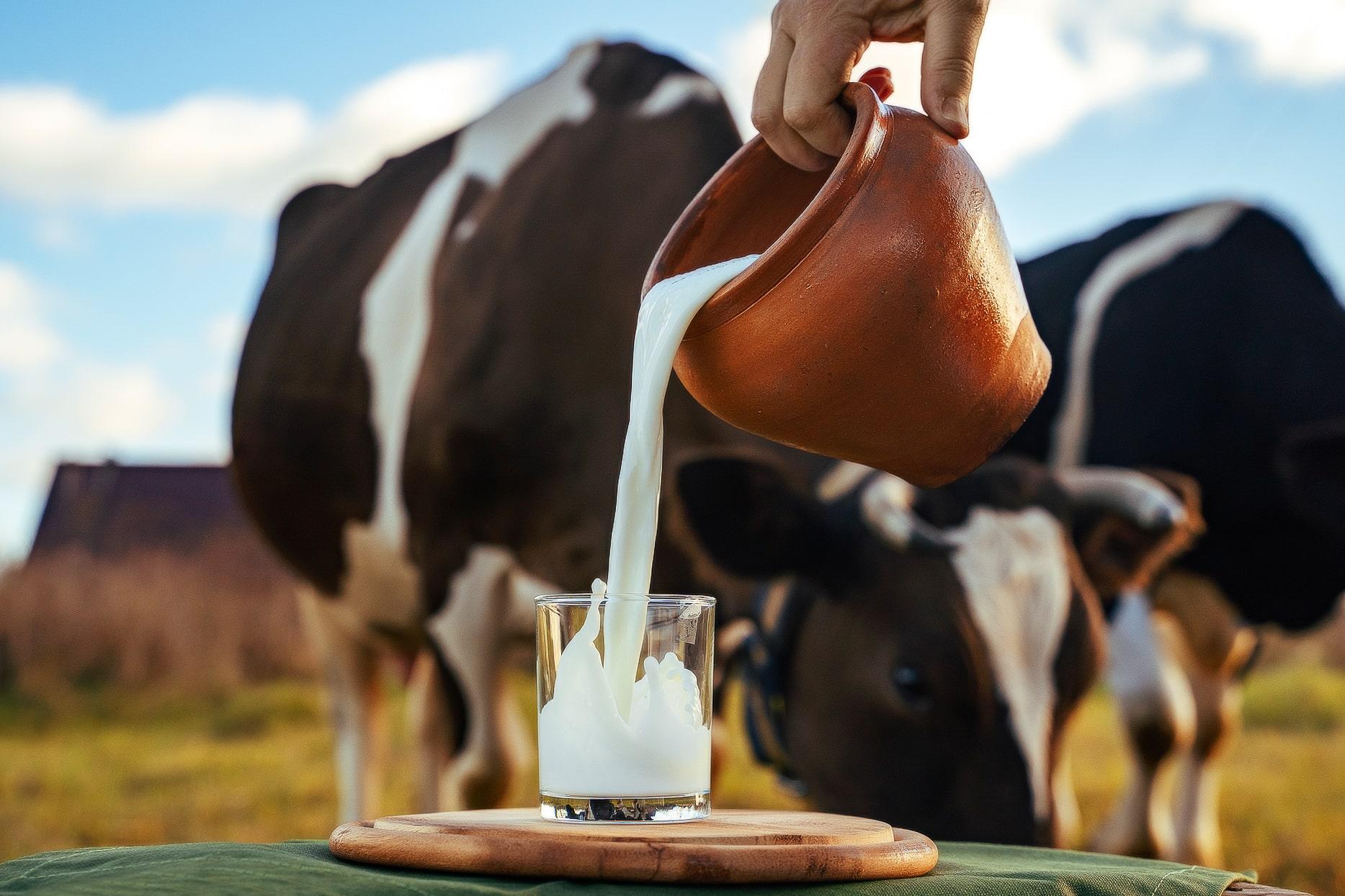 Тверская МВЛ будет обучать специалистов сельхозпредприятий, экспортирующих свою продукцию