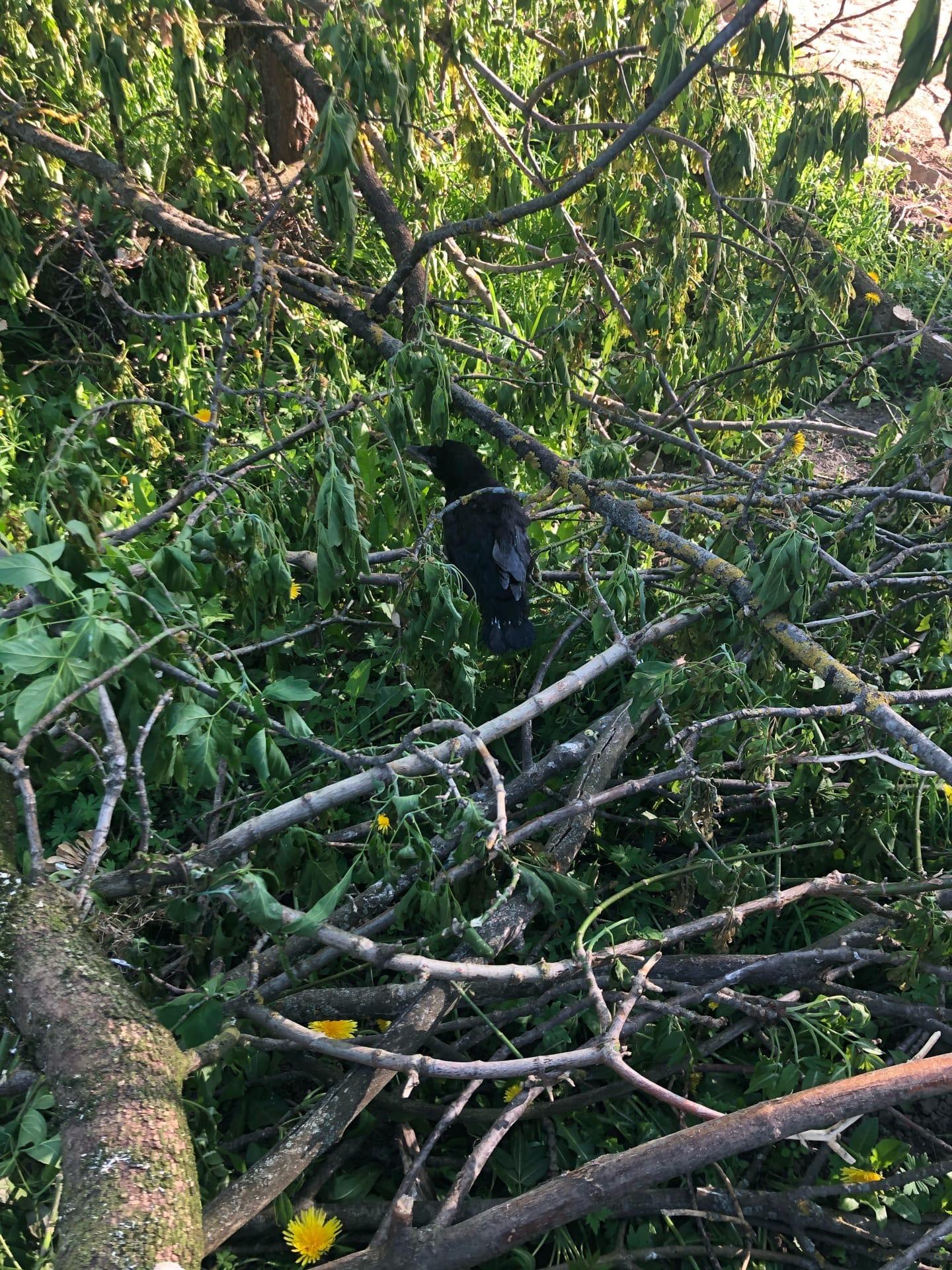В Тверской области от топора пострадали беззащитные птенцы
