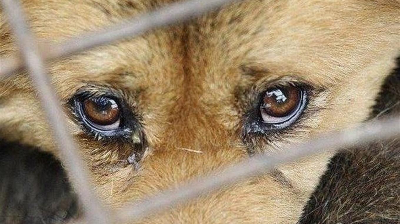 За жестокое обращение с животными жителей Тверской области накажут большими штрафами