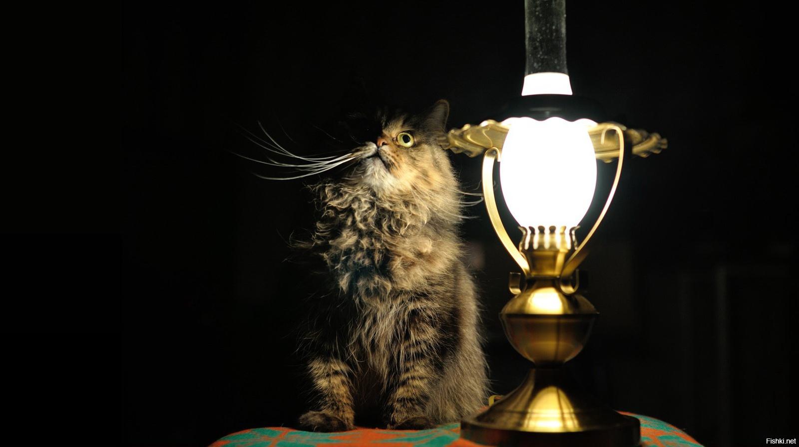В семи городах Тверской области временно отключат электричество