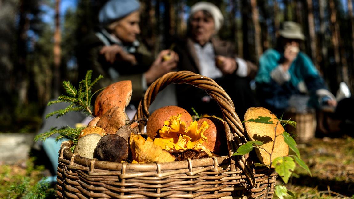 Дело в шляпе: грибникам Тверской области рассказали о новых правилах