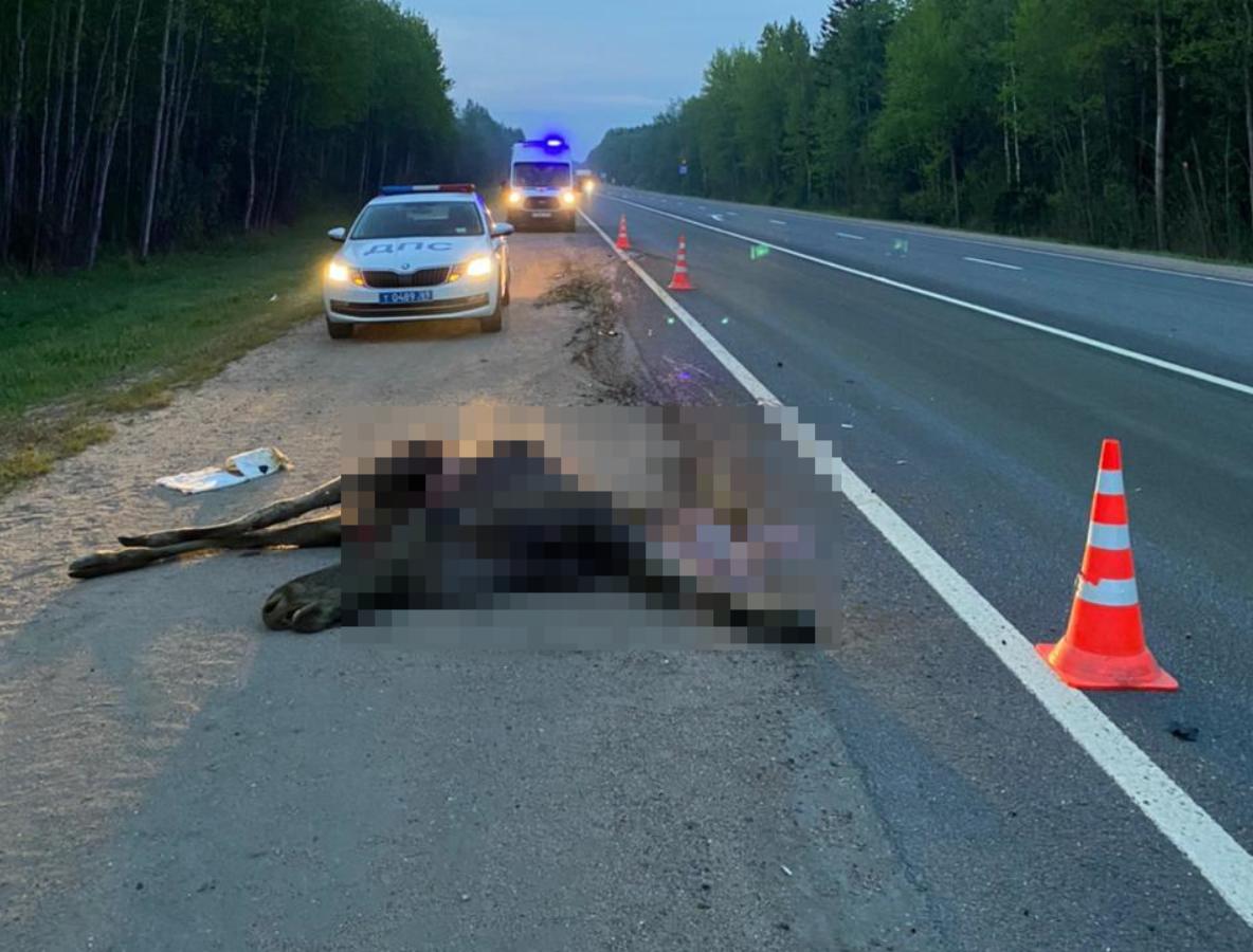 На трассе в Тверской области водитель «Лады» столкнулся с лосём