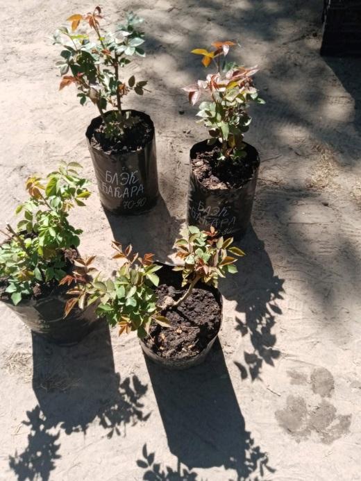 Ягодки и цветочки: в Тверской области торгуют саженцами неизвестного происхождения