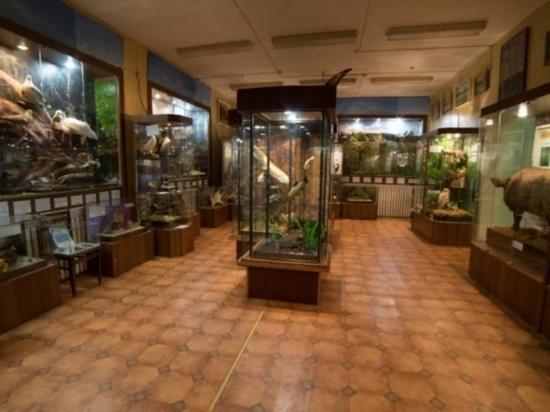 Библиотека поздравила Андреапольский музей с профессиональным праздником