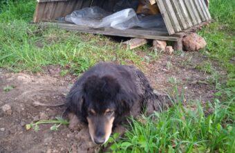 В Твери хозяева больной собаки не дают её лечить