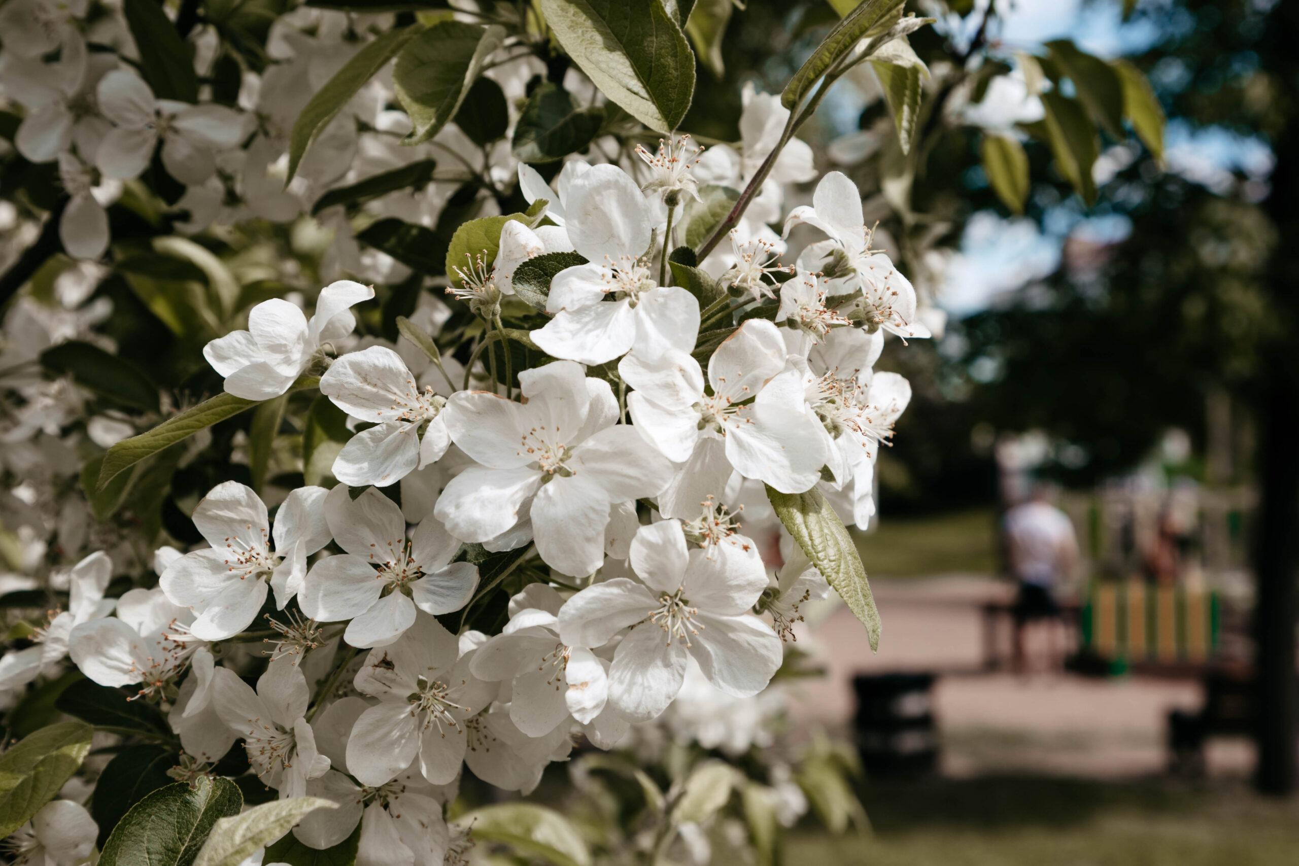Синоптики рассказали, какой будет последняя неделя мая в Тверской области
