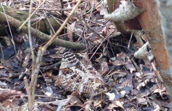 В лесу в Тверской области встретили редкую птицу, раненую охотником