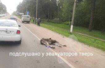 Лосёнок погиб под колёсами машины в Твери