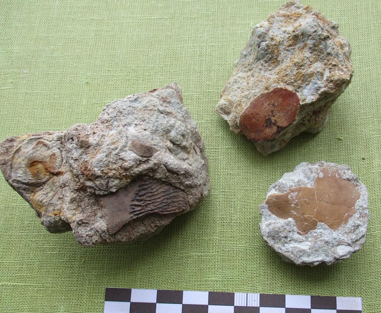 В Тверской области обнаружили фрагменты древнейших рыб