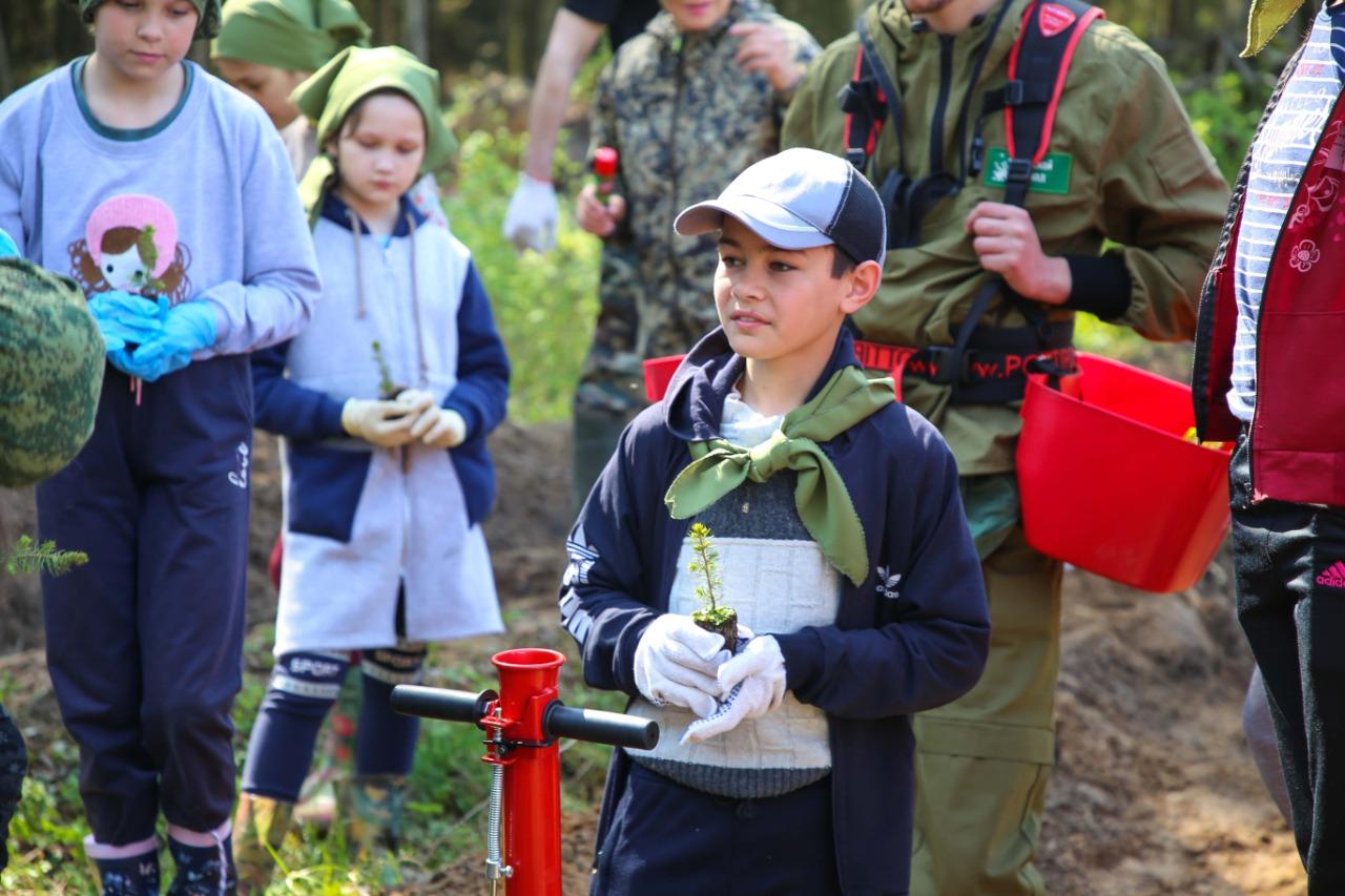 Больше двух тысяч елей посадили тверские активисты в Калининском районе
