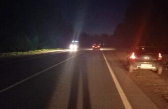 Ночью в Тверской области женщина-водитель не смогла избежать столкновения с лосём