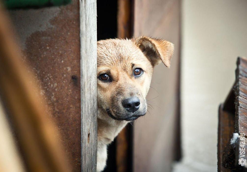 В Тверской области у домашних и бездомных животных появятся права