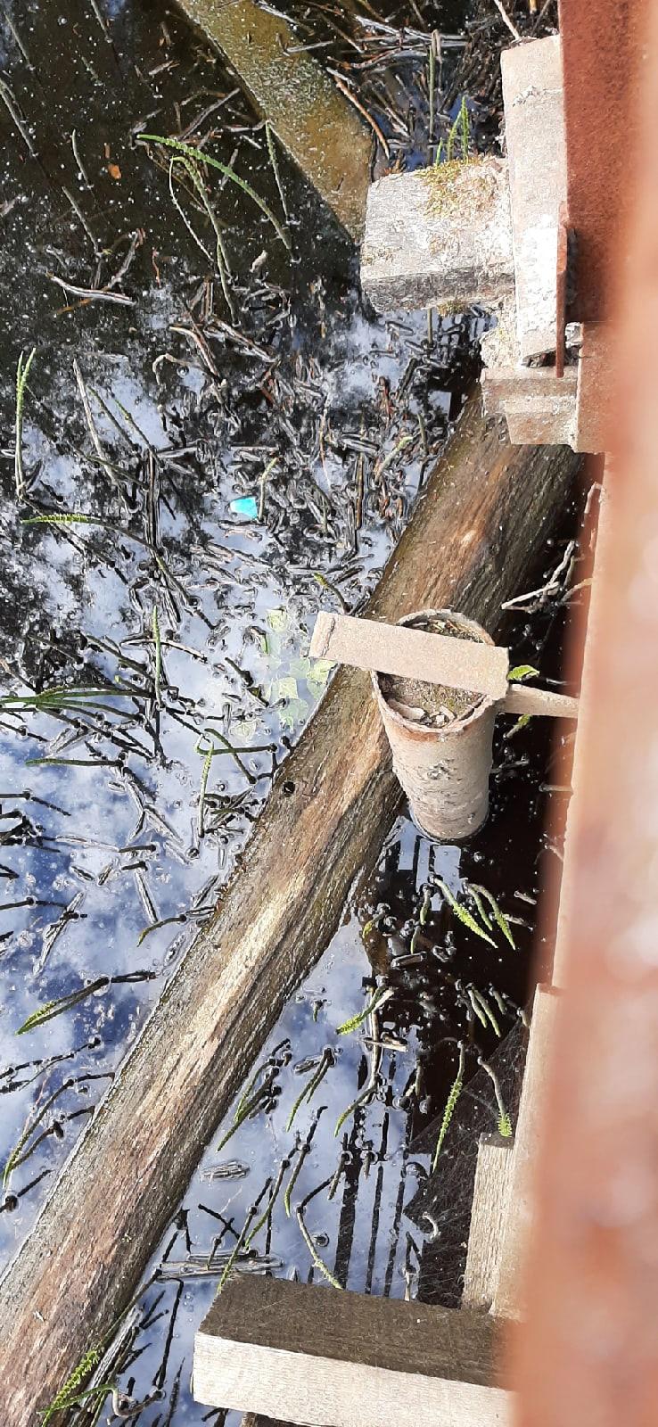 Жители Тверской области бьют тревогу из-за рушащегося моста