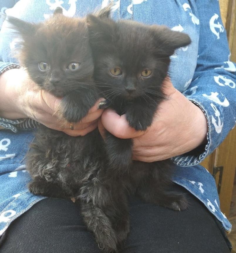В Тверской области дети спасли от смерти двух котят