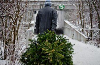 Житель Тверской области пойдет под суд за новогоднюю ёлку
