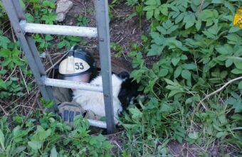 В Тверской области пожарные спасли собаку, провалившуюся в канализацию